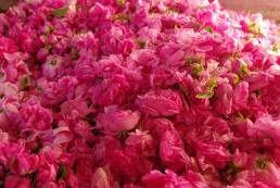 Save the date - Plantes et ingrédients naturels : se sourcer en Occitanie - 27/10/21 à Rivesaltes (66) 2
