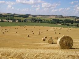 Interbio Occitanie recrute un(e) chargé(e) de mission filières Bio 3